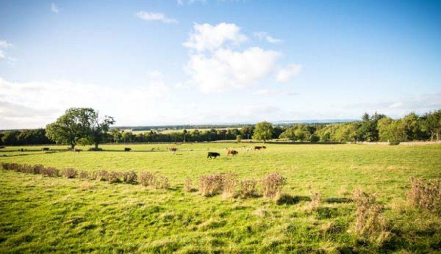 Aurea Countryside